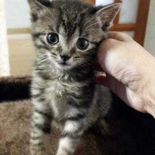 生後2ヶ月の子猫 男の子