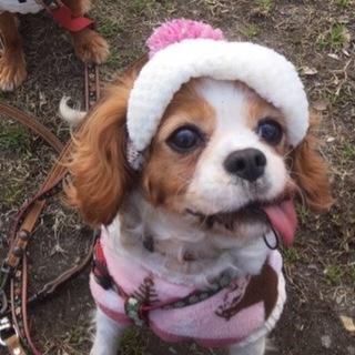 小さな可愛い女の子 サニー 7歳 ブレンハイム