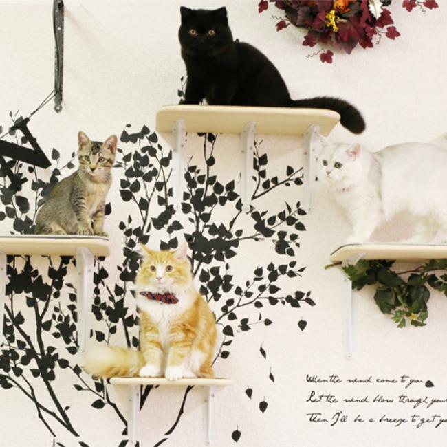 猫カフェmfmfのカバー写真