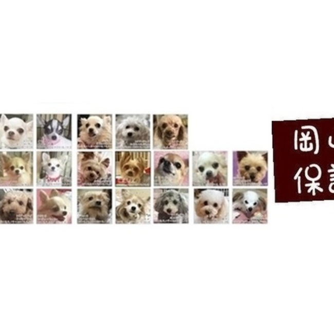 岡山保護犬日記 中村容子のカバー写真