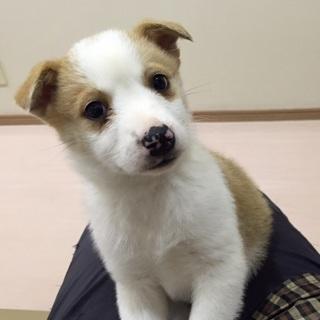 ♪ 生後2ヶ月半 ちっちゃな子犬 ♪