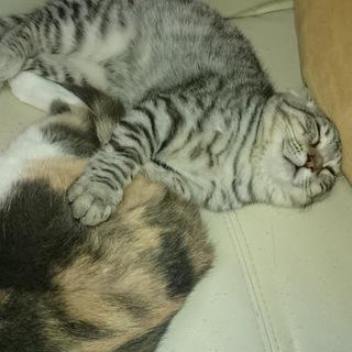 6ヶ月になる猫