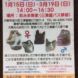 第3回みるくの会「猫の里親会」