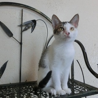 からまつ 猫の方舟里親会に参加します