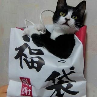 遊び大好き❤ 楽しい白黒くつした子猫ちゃん❤