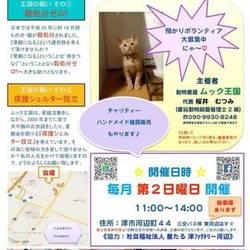 雨天でも開催☆犬猫譲渡会in津市