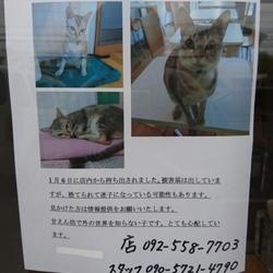 店の猫が連れ拐われました