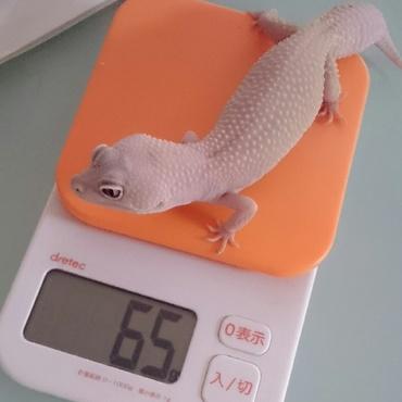 体重測定(*´ω`*)