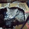 妊婦猫を保護し8匹の赤ちゃんが産まれました。