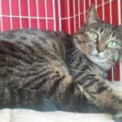 手ごわい福島保護猫マアムちゃん正式譲渡になりました