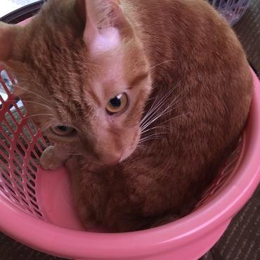 洗濯カゴの中で洗濯待ちです!