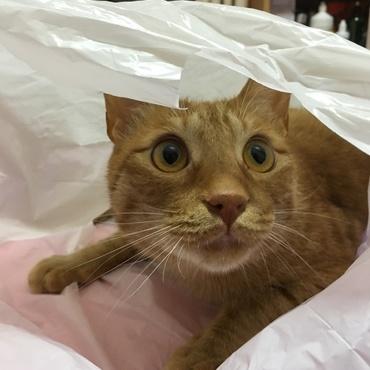 袋がだいすき♡