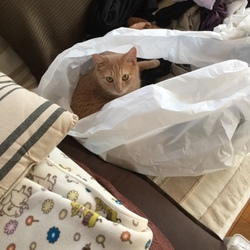 買い物袋が大好きヾ(*´エ`*)ノ