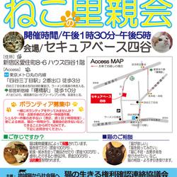1月14日(土)、15日(日)地域猫から社会猫へ・四谷里親会(ボランティアも募集中)
