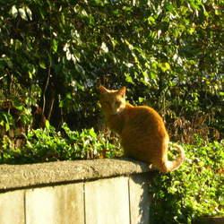 京都のとあるお寺の野良猫たち