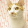 元気いっぱい!人も猫も大好きです サムネイル3