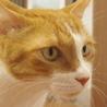中高齢猫のため、高齢者応募可(諸条件あり) サムネイル3