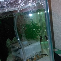 川魚・淡水魚達