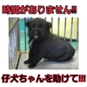 時間がありません!仔犬ちゃんの命を助けて下さい!!