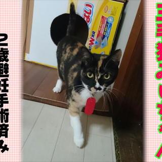 三毛猫みぃちゃん☆北九州猫多頭崩壊
