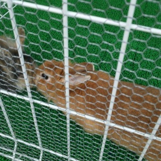 保護ウサギの子どもたち