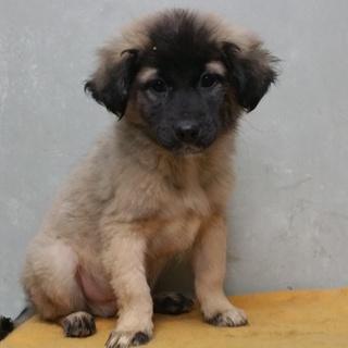 3~4ヶ月の兄弟子犬の家族緊急募集!!