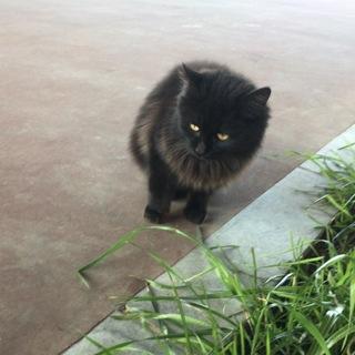 【募集一時停止】黒猫