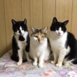 亡くなった叔母の猫たちの里親が決まらない