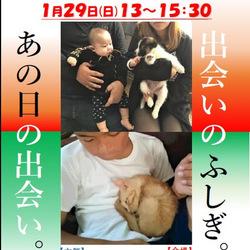 青い鳥動物愛護会☆保護犬猫の譲渡会