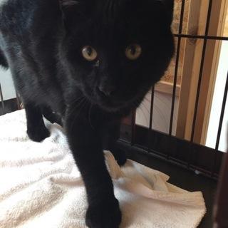 黒猫★モン