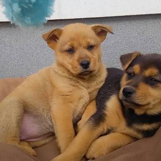 生後2ヶ月子犬の里親さん募集中