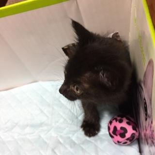 甘えん坊の黒子猫