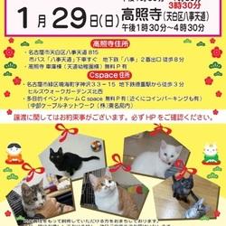 1/14(土)名古屋市緑区にて猫の里親会 アイラの会 サムネイル1