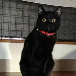 幸せの黒猫 カギシッポのハリー君