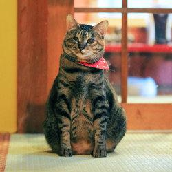 猫のなんでも相談会(予約不要、参加無料)