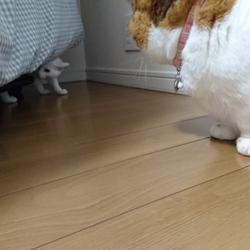 先住猫と新入り猫(その2)