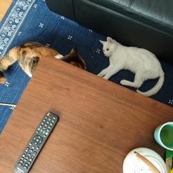 先住猫と新入り猫(その3)