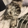 人懐っこい子猫の里親募集します。