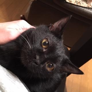 変わったしっぽの黒猫ちゃん