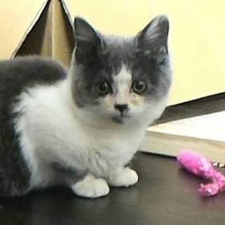 うさぎと猫が大好きな方、フワモコなグリジアちゃん。