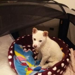 3ヶ月~4ヶ月 子犬 仮名 まる
