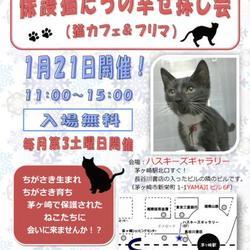 1月21日開催 CCP主催 第50回保護猫たちの幸せ探し会!