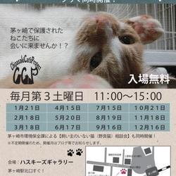 CCP主催 第51回保護猫たちの幸せ探し会!  サムネイル1
