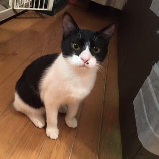 すりすり懐こい黒白猫ちゃん