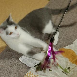 どんどん可愛くなる猫ちゃんです。パート1
