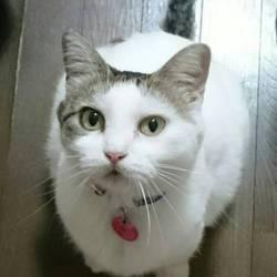 猫を捜しています 東村山市