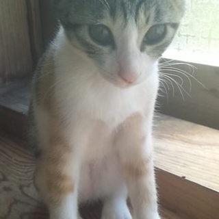 可愛らしい三毛猫です。