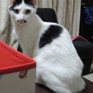猫飼い初心者向きニャンコ★むつみちゃん