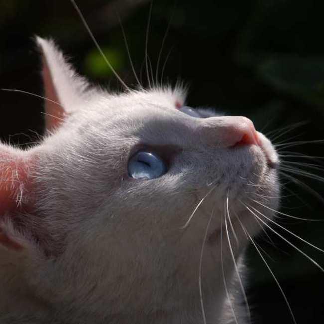 特定非営利活動法人門司港レトロ・犬猫を守る会のカバー写真