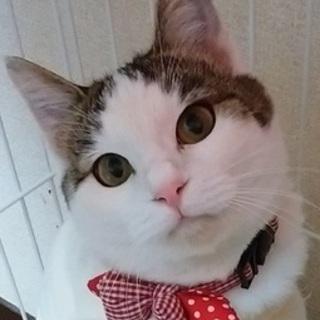 1/22銀座★ジェニーちゃん★スリスリゴロゴロ美猫